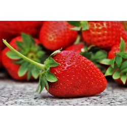 FL FRAISE CLERY BARQUETTE