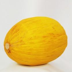 FL MELON CANARI AU POIDS